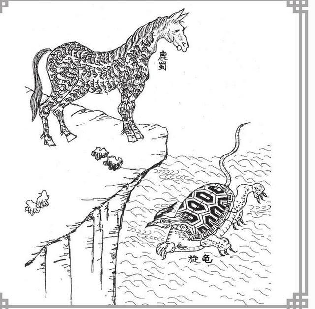 继《哈利波特》后,最近由J.K.罗琳原著小说改编的电影《神奇动物在哪里》又在中国大银幕上狠狠的火了一把,不少网友看完这部电影后都会感叹里面动物的神奇,实际上,神奇动物在我们中国早已存在,在《山海经》里就记叙了很多神奇动物。   1 兕   《山海经•海内南经》:「兕在舜葬东,湘水南,其状如牛,苍黑,一角。」   这种叫做「兕」的动物,实际上就是犀牛。你要以为中国本土不产犀牛,那就想错了。在先秦时期,中国北方、中原与长江流域,都盛产犀牛,《左传•宣公二年》就记载:「犀兕尚多。」