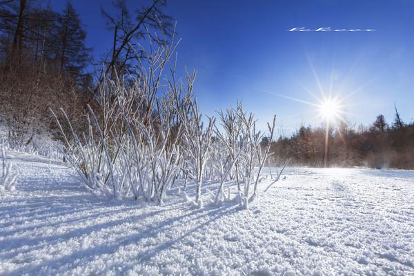 冬季穿越内蒙北部原始林区 全世界99的人都没有过的震撼经历 - 勒克儿 - 党青博客