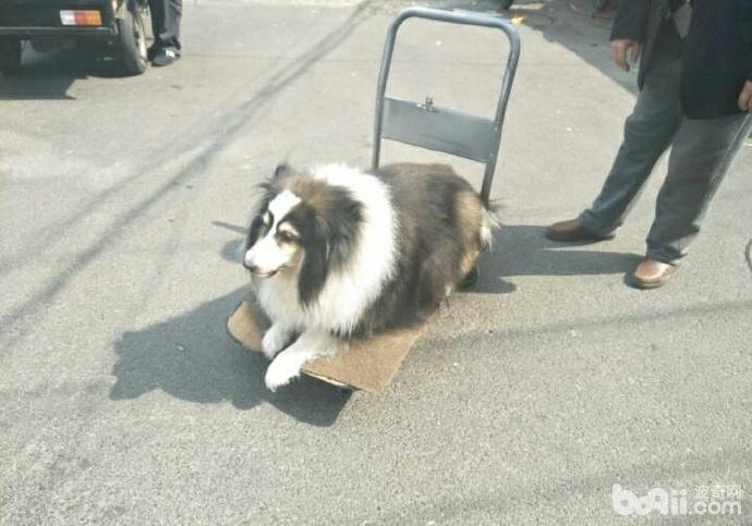 陪了老人14年的狗狗如今走不动了 老人就推着它出来遛弯-图片1