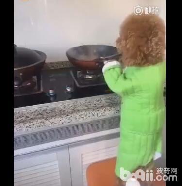 泰迪做饭给主人吃 把菜炒完之后 还给主人问了这样一个问题!-图片2