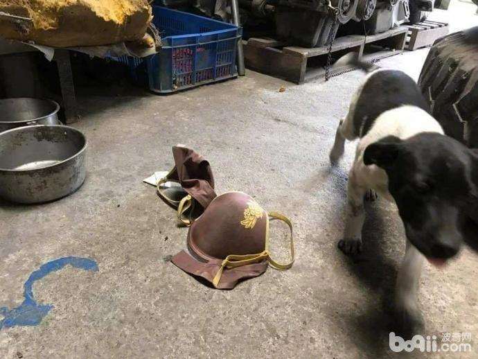 狗狗叼来邻居家的1件衣服 当邻居找过来之后 主人真的好尴尬!-图片1
