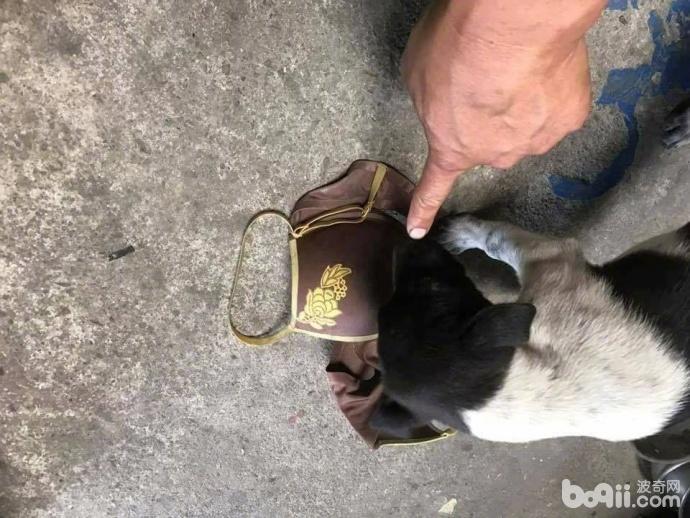 狗狗叼来邻居家的1件衣服 当邻居找过来之后 主人真的好尴尬!-图片3