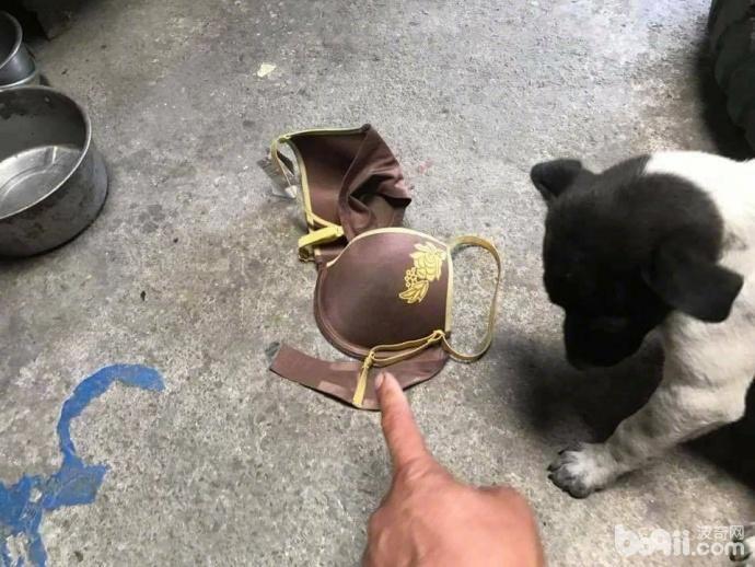 狗狗叼来邻居家的1件衣服 当邻居找过来之后 主人真的好尴尬!-图片2