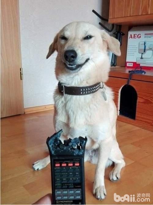 狗狗犯错了之后 眼神里满满的都是歉意 可最后一只却笑了-图片4