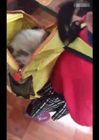 女孩上学路上捡了1只流浪狗 到校后却哭起来 哭的原因好暖心!-图片3