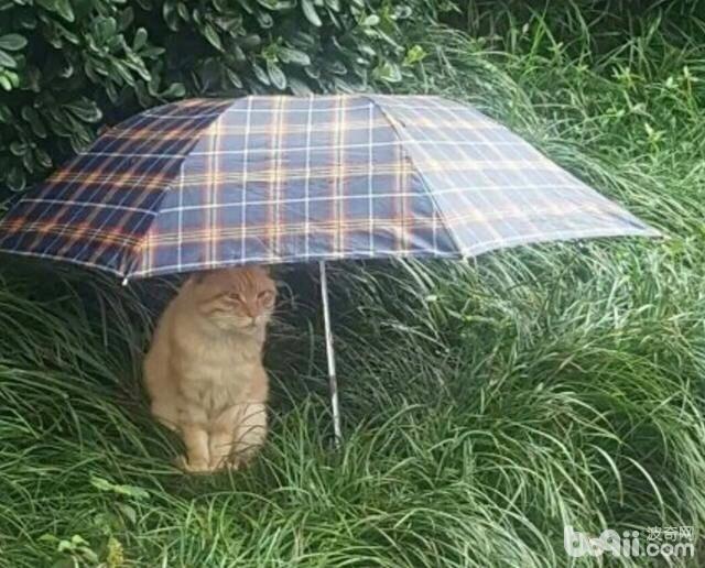 同款猫咪,同款事件,就是这个伞不是同款的。-图片2