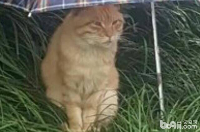 同款猫咪,同款事件,就是这个伞不是同款的。-图片3