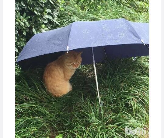同款猫咪,同款事件,就是这个伞不是同款的。-图片4