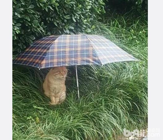 同款猫咪,同款事件,就是这个伞不是同款的。-图片1