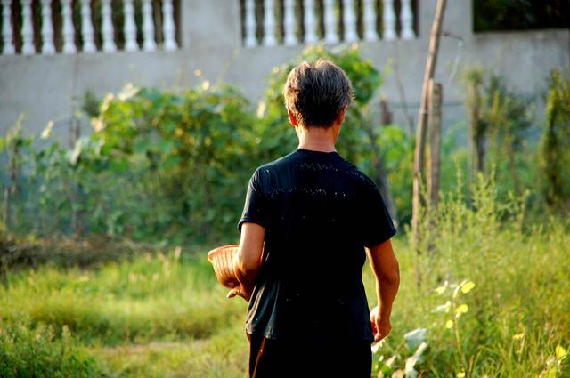 农村门前和屋后,适合栽这五种树,势必给家里带来财源和健康