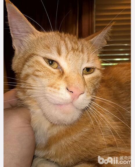 7只猫咪被蜜蜂叮了之后 最后1个虽然很惨 但我忍不住笑出声-图片2