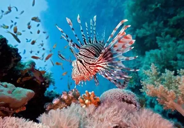 壁纸 海底 海底世界 海洋馆 水族馆 桌面 600_419