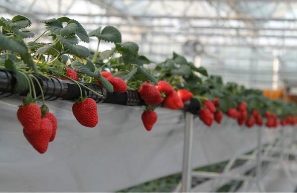 智慧农夫:什么是智能温室? - 智慧农夫 - 智慧农夫