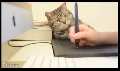 旁边有一只猫,猫咪1只在旁边和主人的手玩耍,这还怎么工作啊?-图片2