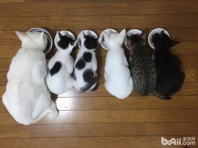 猫妈生了5个小猫 看着这小猫的颜色 这一定是个有故事的猫妈!-图片1