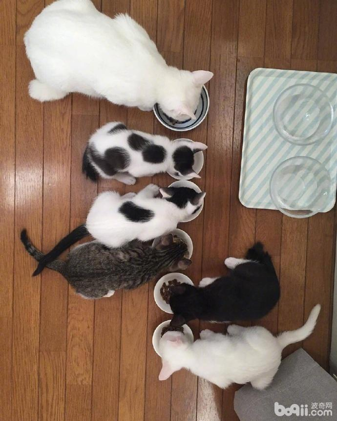 猫妈生了5个小猫 看着这小猫的颜色 这一定是个有故事的猫妈!-图片3