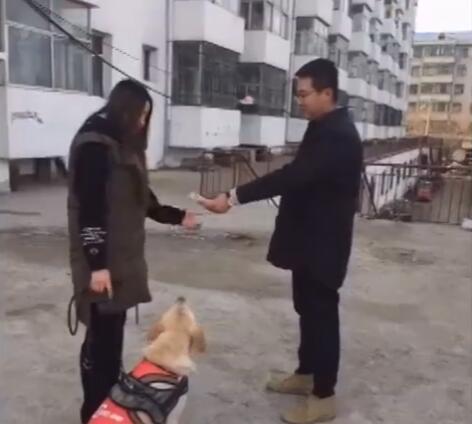 女主假装把金毛卖给了别人 狗跟着别人没走一会 接下来的好感人-图片1