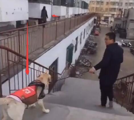 女主假装把金毛卖给了别人 狗跟着别人没走一会 接下来的好感人-图片4