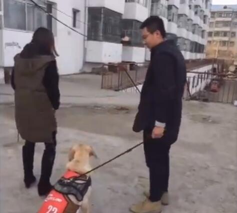女主假装把金毛卖给了别人 狗跟着别人没走一会 接下来的好感人-图片2