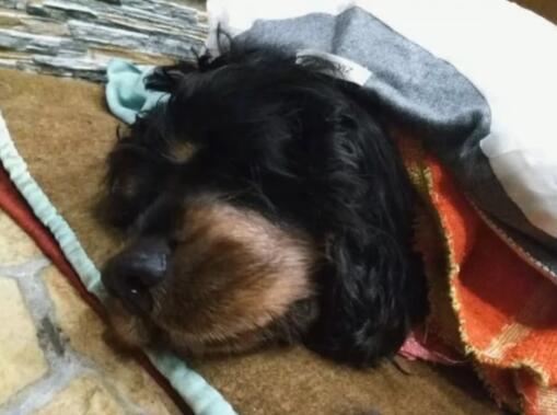 陪伴19年的狗去世了 看到狗狗留的礼物 女主人的眼泪再也忍不住-图片1