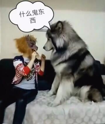 女主人带上狼的面具吓狗狗 然而这狗确是这个样子 让人意外!-图片1
