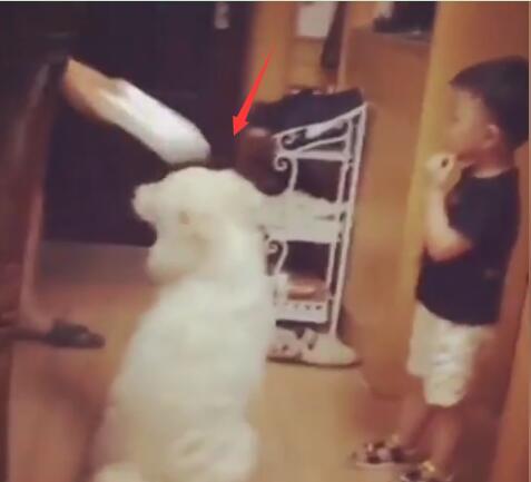 狗狗被爸爸打了 儿子赶紧来阻止 爸爸打儿子狗狗来阻止亲兄弟啊-图片1