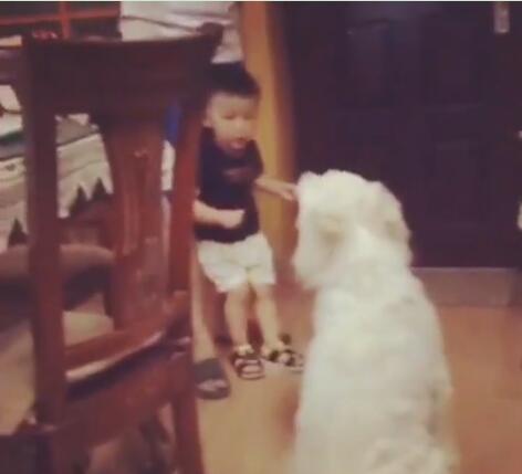 狗狗被爸爸打了 儿子赶紧来阻止 爸爸打儿子狗狗来阻止亲兄弟啊-图片3