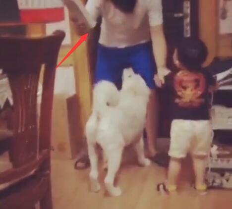 狗狗被爸爸打了 儿子赶紧来阻止 爸爸打儿子狗狗来阻止亲兄弟啊-图片5