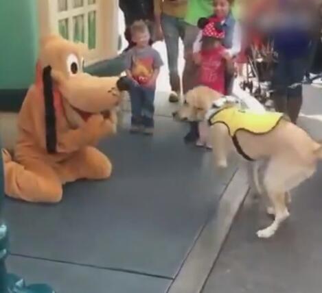 狗狗到迪士尼看到布鲁托后 居然认它做大哥 拉都不走啊!-图片3