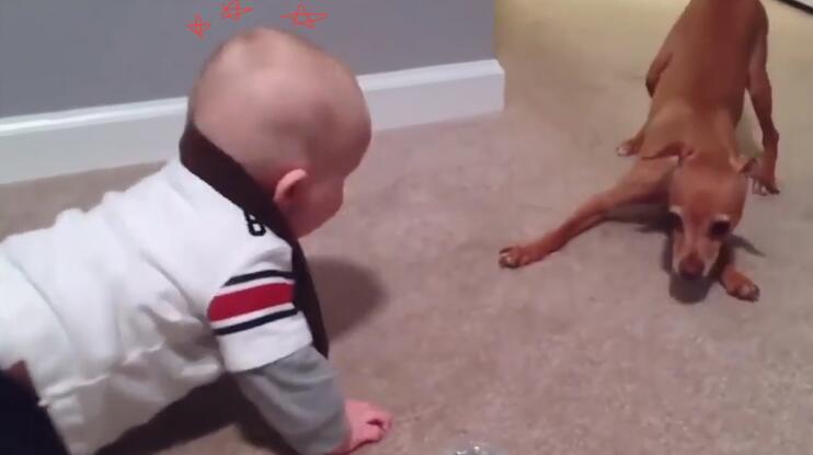 小孩和狗狗趴地上吵架了 可狗狗的反应却把小孩给逗乐了!-图片1