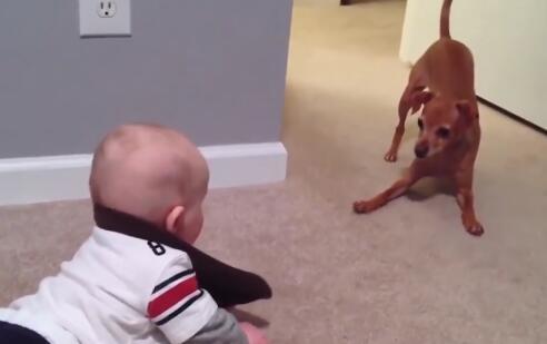 小孩和狗狗趴地上吵架了 可狗狗的反应却把小孩给逗乐了!-图片4