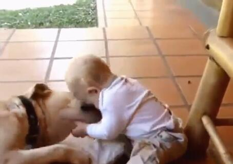 大狗和自己的小主人玩耍 小主人却把狗狗。。。-图片2