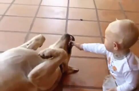 大狗和自己的小主人玩耍 小主人却把狗狗。。。-图片4