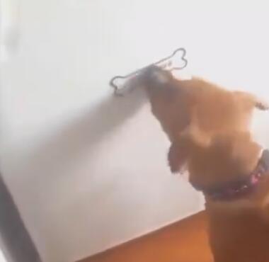 主人给狗狗在墙上画了个骨头 接下来狗狗的表现太搞笑了!-图片2