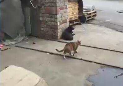 猫爷出去巡游看到一黑狗 就直接这样欺负狗狗 狗狗好可怜-图片1
