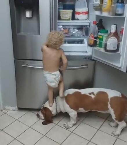 帮小主人开冰箱 可狗狗下一秒就这样坑小主人 可怜的小主啊-图片2