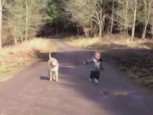 小主人出去遛大狗狗 路上松开了牵引绳 狗狗的举动很暖心!-图片1