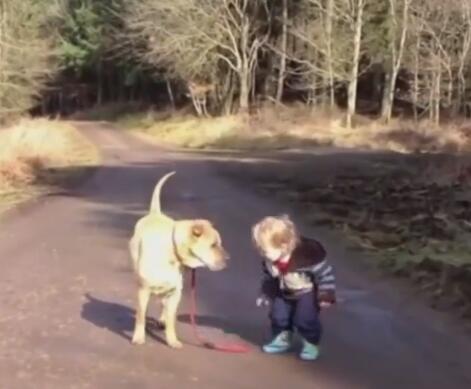 小主人出去遛大狗狗 路上松开了牵引绳 狗狗的举动很暖心!-图片3