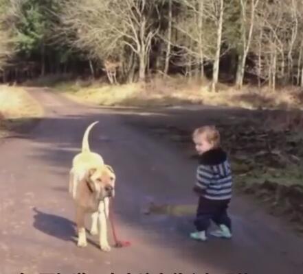 小主人出去遛大狗狗 路上松开了牵引绳 狗狗的举动很暖心!-图片4