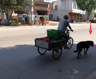73岁的腿病大爷骑三轮车骑不太动了 忠狗的举动让人泪目!-图片3