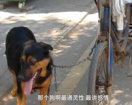 73岁的腿病大爷骑三轮车骑不太动了 忠狗的举动让人泪目!-图片5