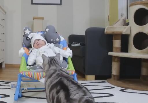 家里的小主人出生了 养的5猫都好奇 立马上前围观!-图片1