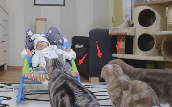 家里的小主人出生了 养的5猫都好奇 立马上前围观!-图片2
