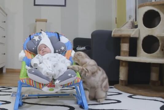 家里的小主人出生了 养的5猫都好奇 立马上前围观!-图片3