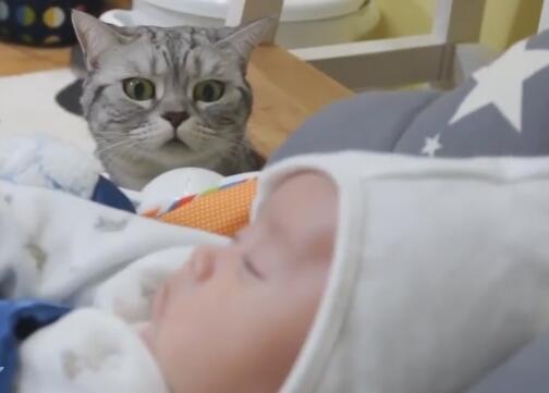 家里的小主人出生了 养的5猫都好奇 立马上前围观!-图片5