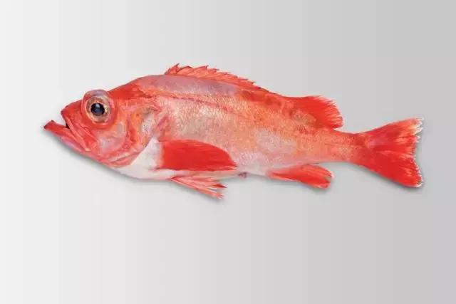 冰岛红鱼 deepsea redfish  产地:冰岛 品牌:冰地(fisk) 产品规格