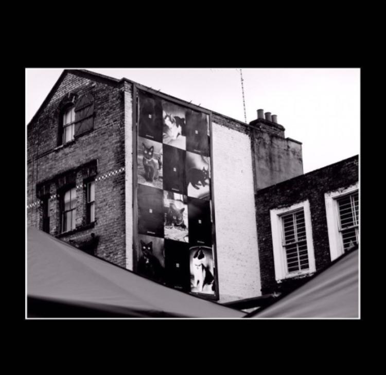 """纪梵希在四个城市贴海报,""""你见过这只猫吗?"""""""