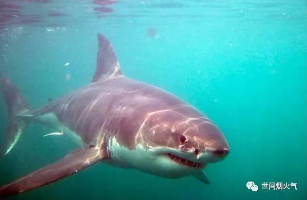 壁纸 动物 海洋动物 鱼 鱼类 桌面 598_390