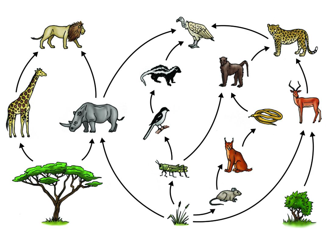 在地球生物不断进化的过程中,各种各样的动物,在食物链中的位置也在不
