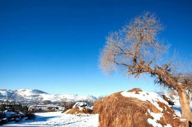 """冬季坝上, 夏天坝上草原算什么?冬季的这里霸占了冬天所有的美!   坝上的冬天别有韵味。寒冷、冰雪、白桦、白毛风天地一色。给我留下的深深的印象   不过,倘若你多住几日,就会发现寒冷下的温暖、寂静中的喧嚣和天地一色中的七彩你就会爱上坝上的冬天,爱上她    [[img ALT="""""""" src=""""http://simg."""